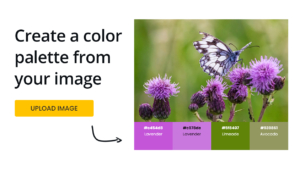 create-color-palette-from-image-online-free